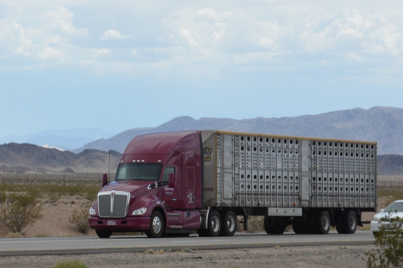 Learn to drive cdl jobs