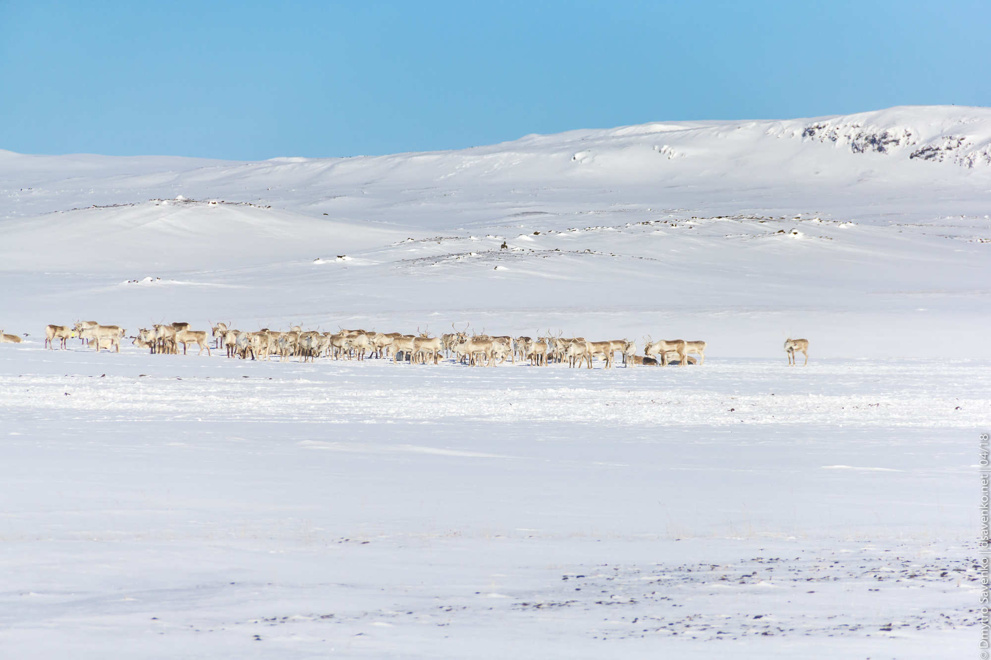 img_iceland_d2_008