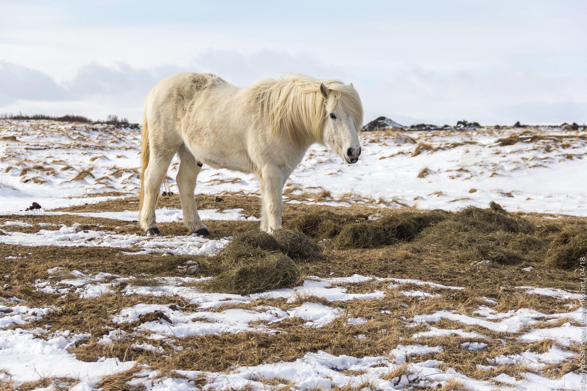 img_iceland_d3_014