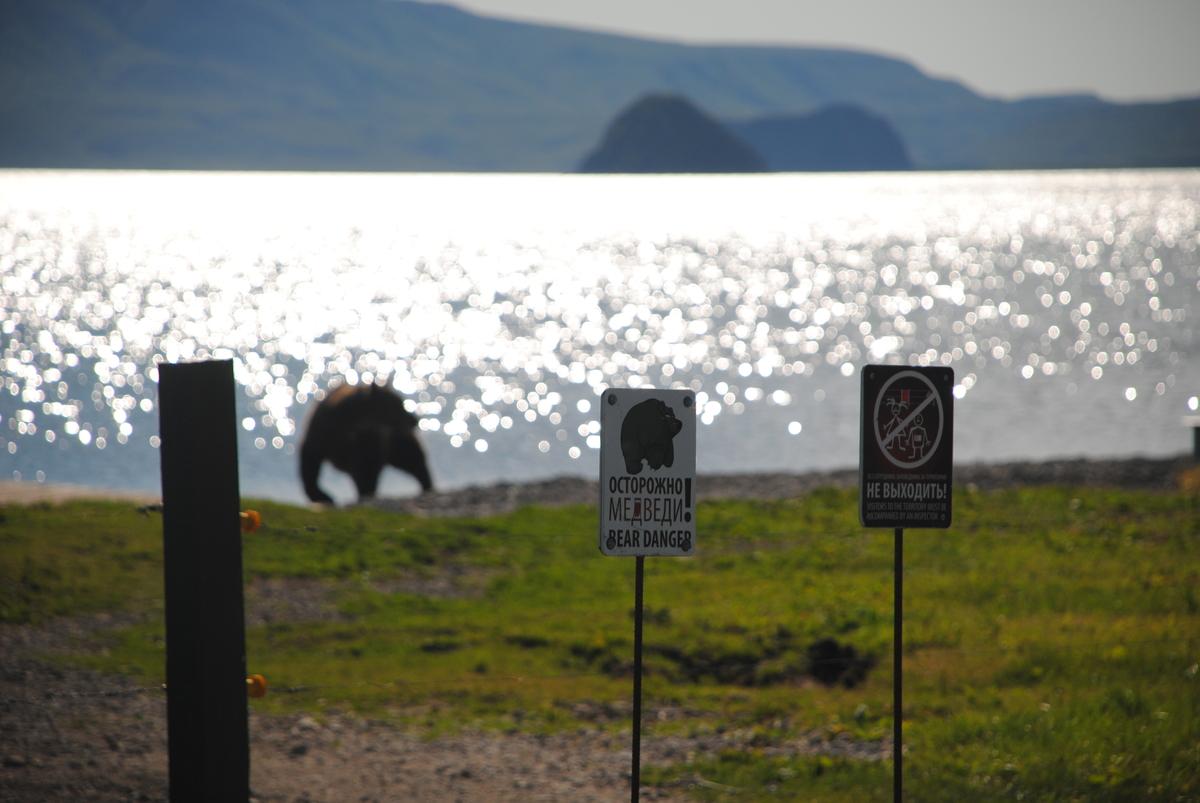 Осторожно, медведи :)