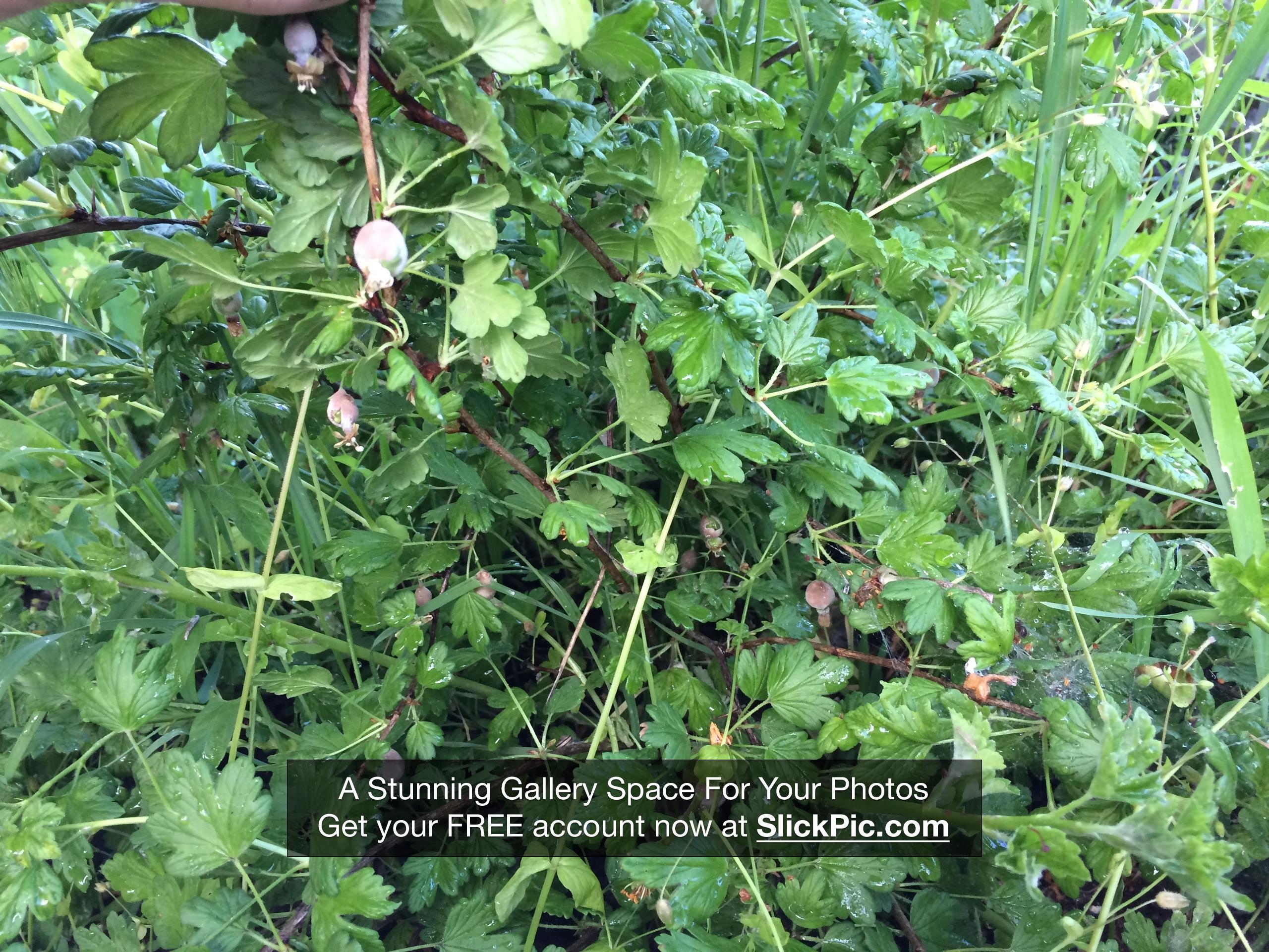 выращивание растений с биопрепаратами