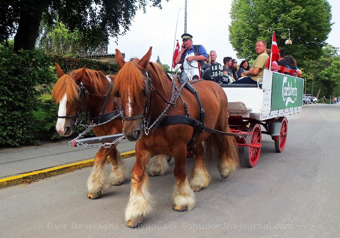 carlsberg_horses